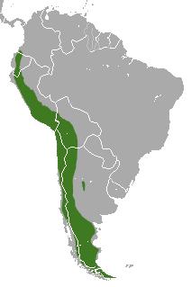 Distribución del zorro culpeo