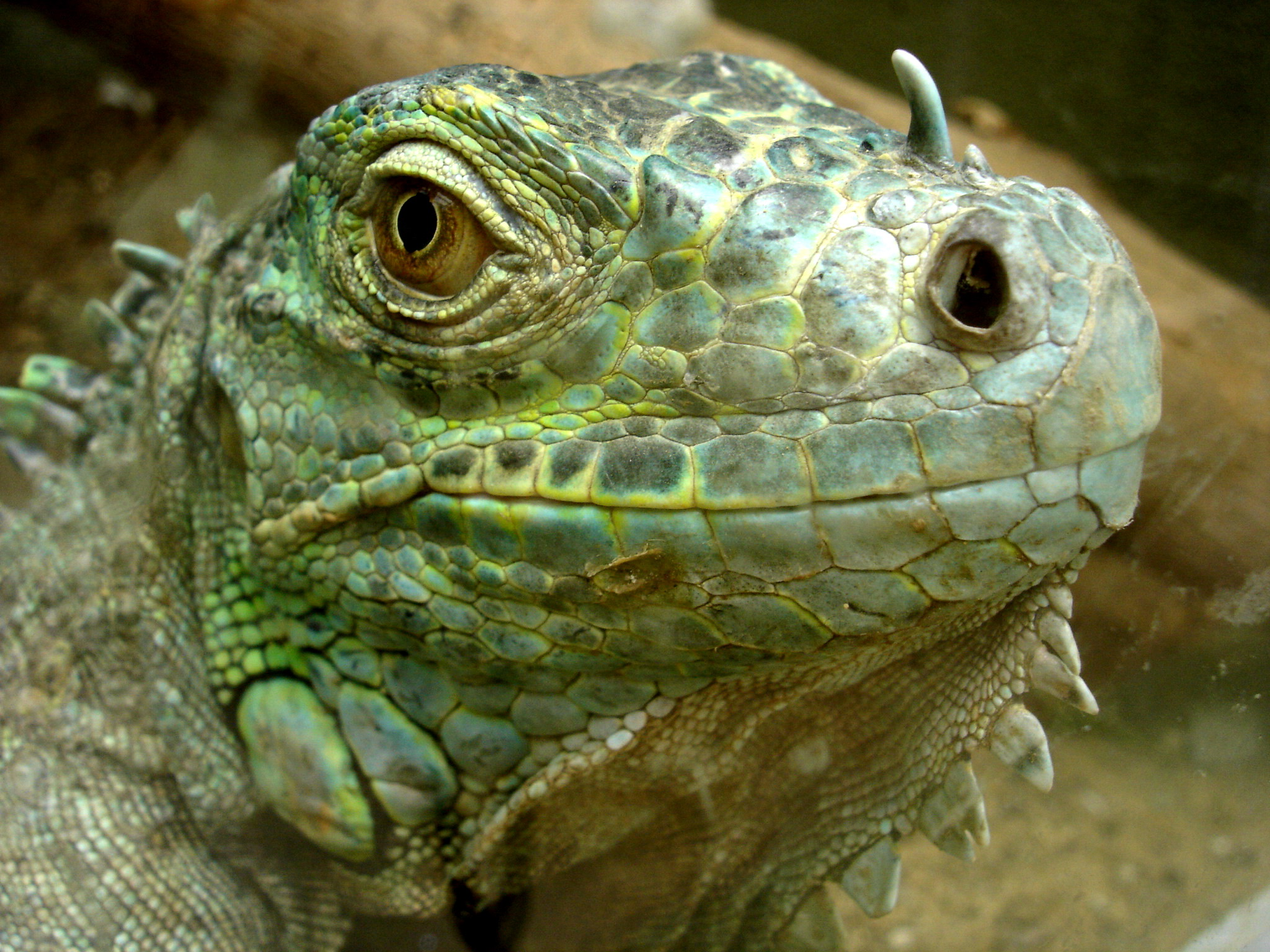 Reptiles Free To Good Home West Yorkshire