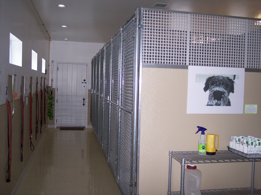 Best Dog Kennels Near To Ipswich