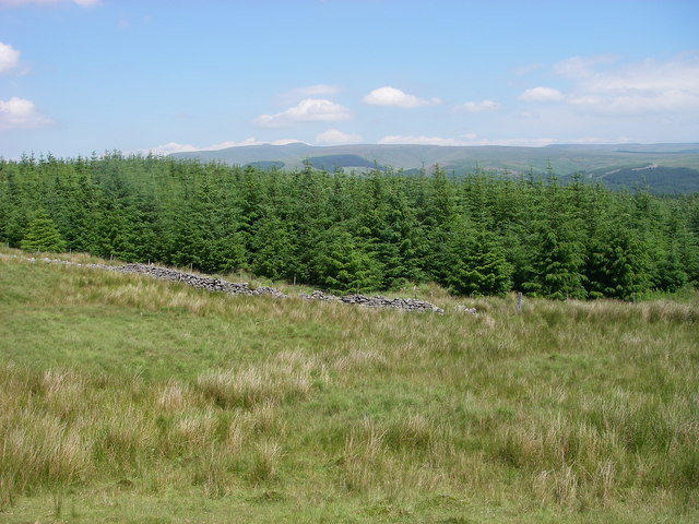 Garwnant Forest - geograph.org.uk - 867409