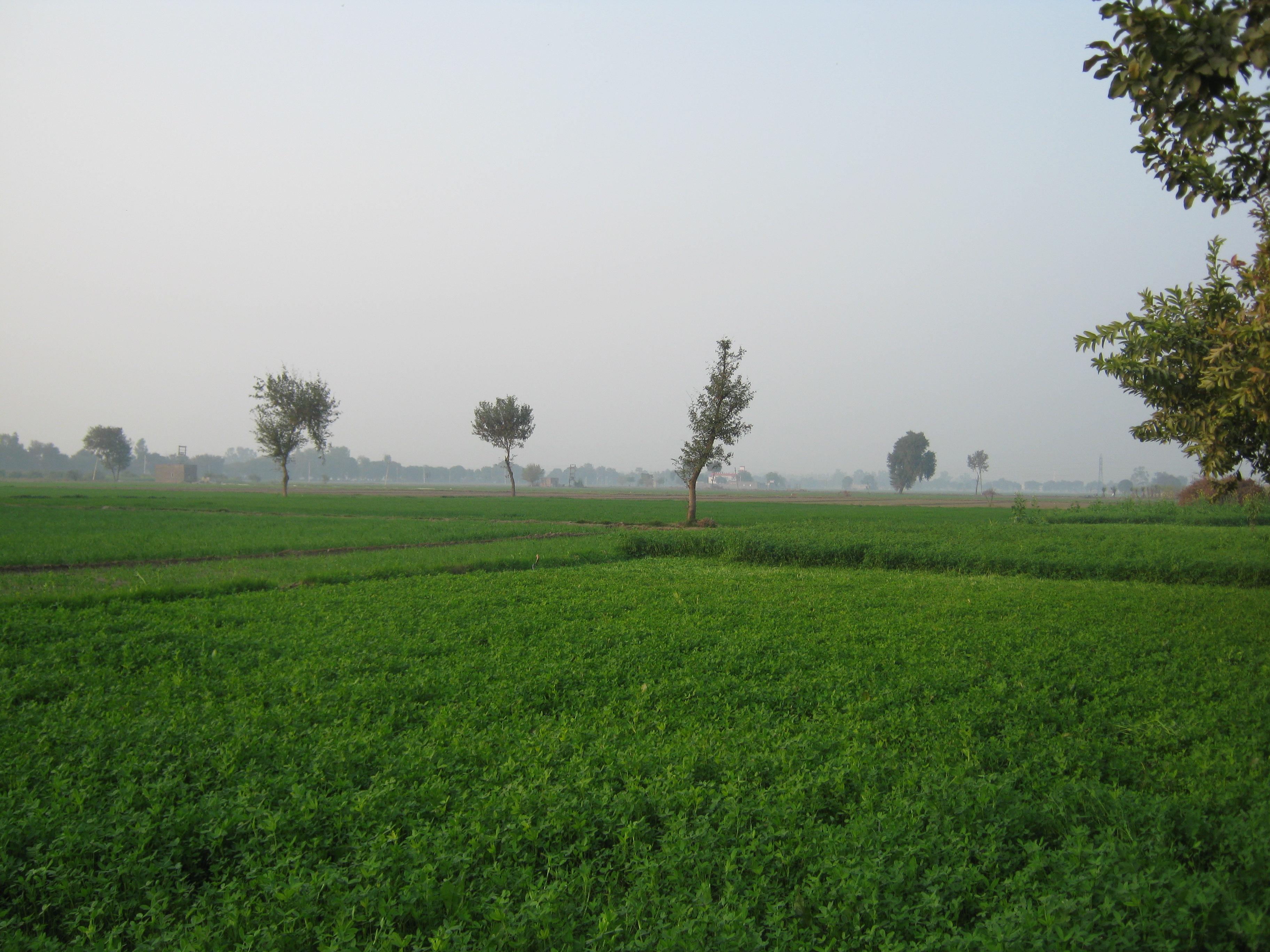Haryana | Familypedia | FANDOM powered by Wikia