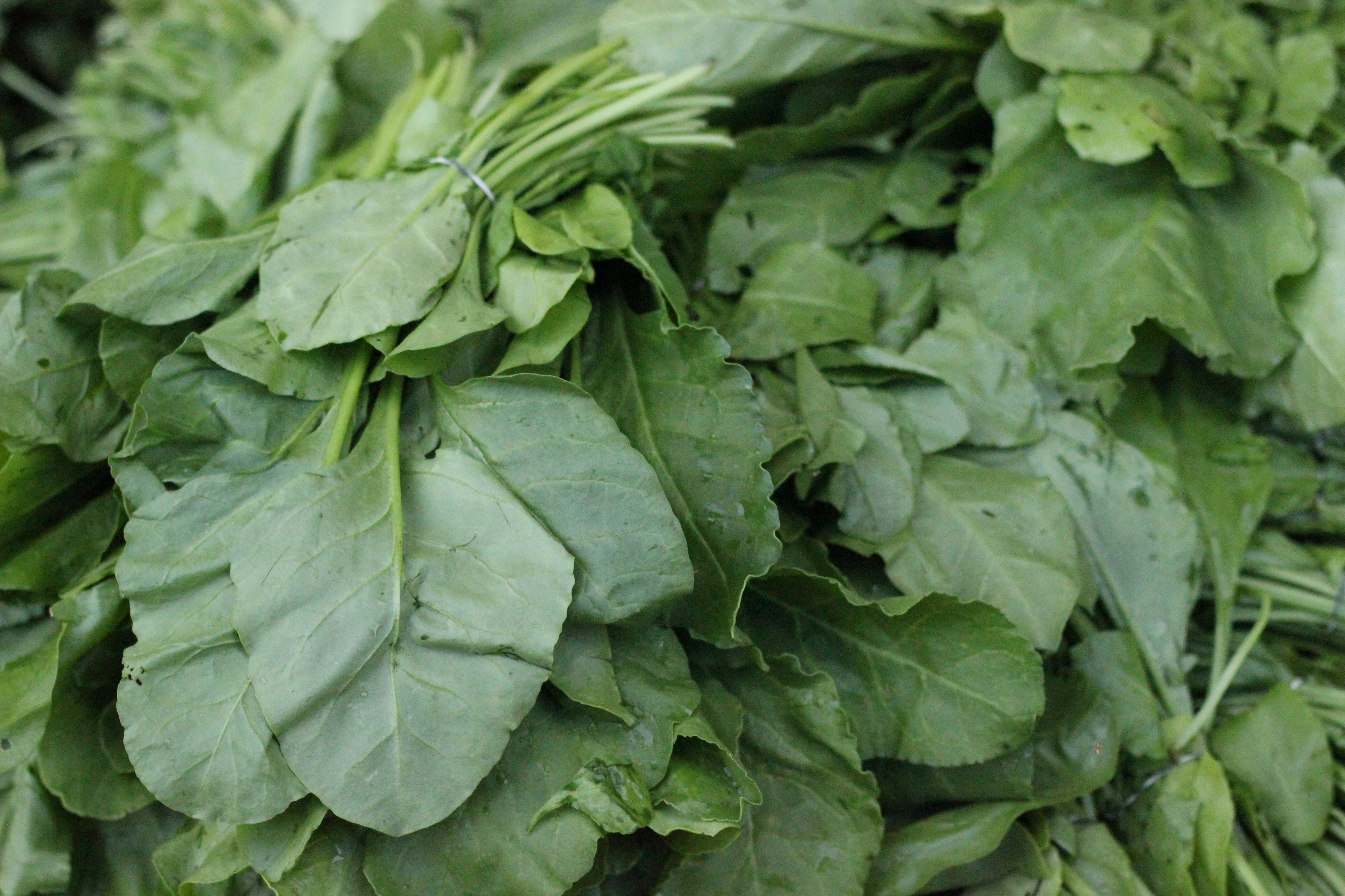Leafy greens contain a number of beneficial nutrients.