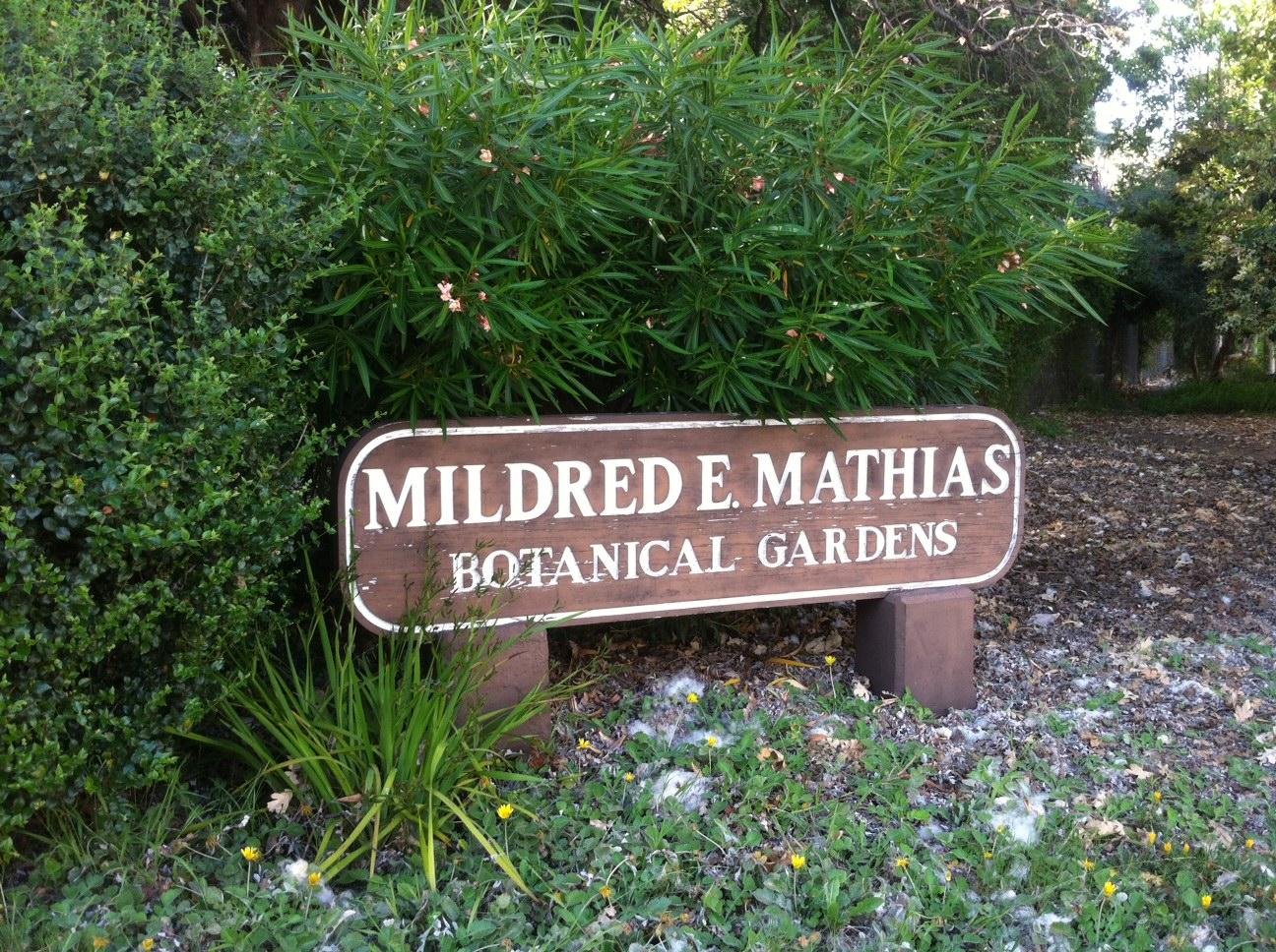 File Mildred E Matthias Botanical Gardens 01 Jpg Wikimedia Commons
