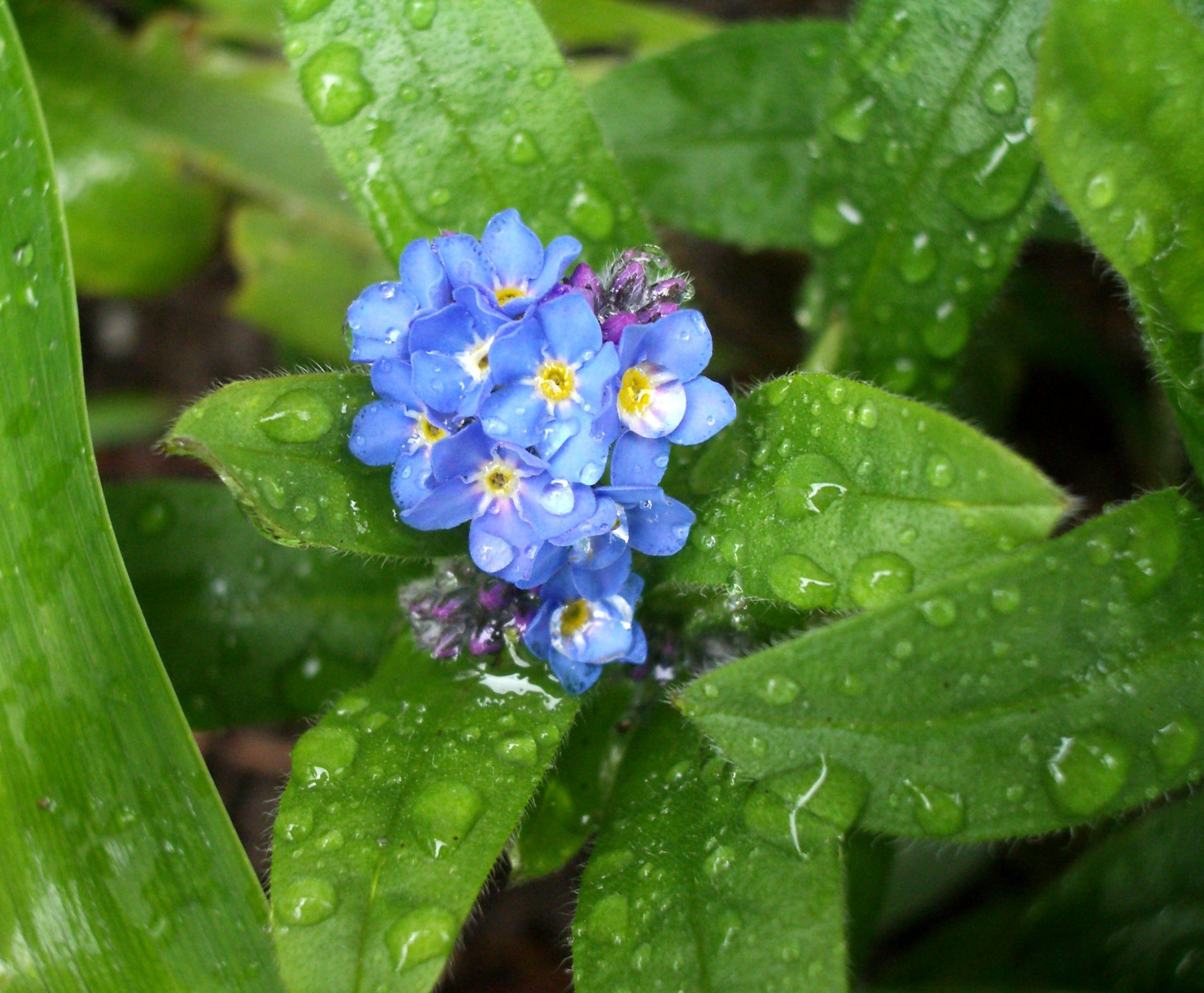 Как выглядит резеда цветок фото