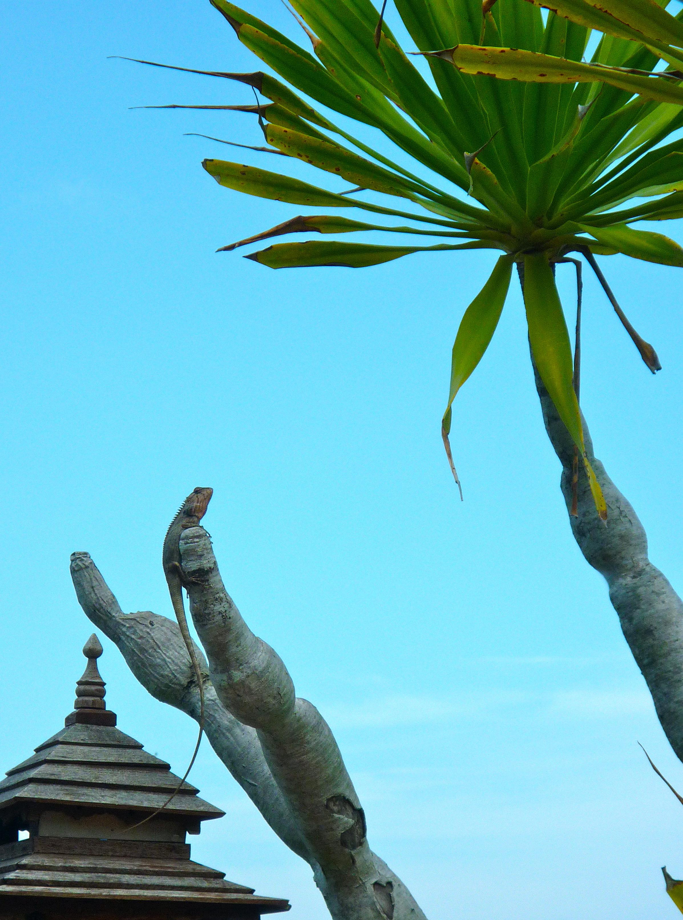Nakamanda, Thailand.jpg