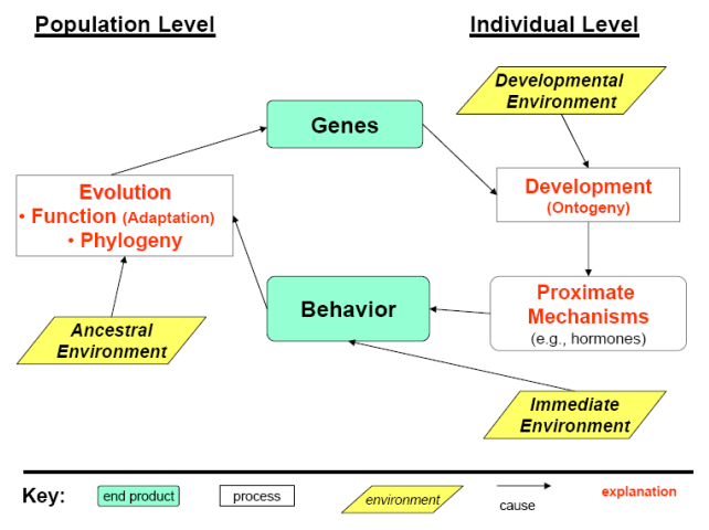 file new behavioral diagram png   wikimedia commonsfile new behavioral diagram png