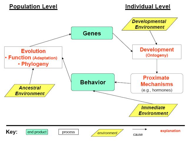 file new behavioral diagram png   wikimedia commonsfile new behavioral diagram png