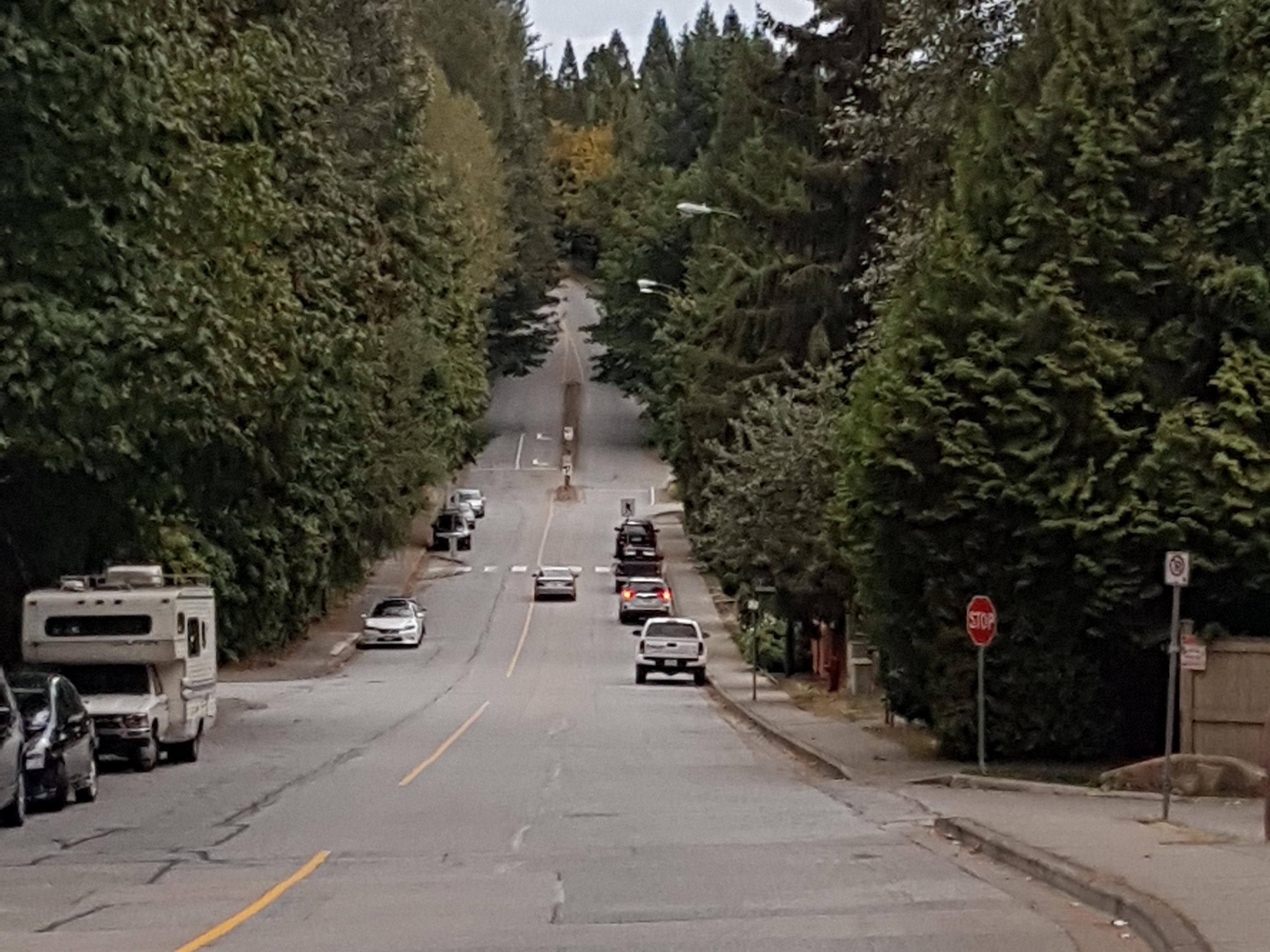 Collector road - Wikipedia