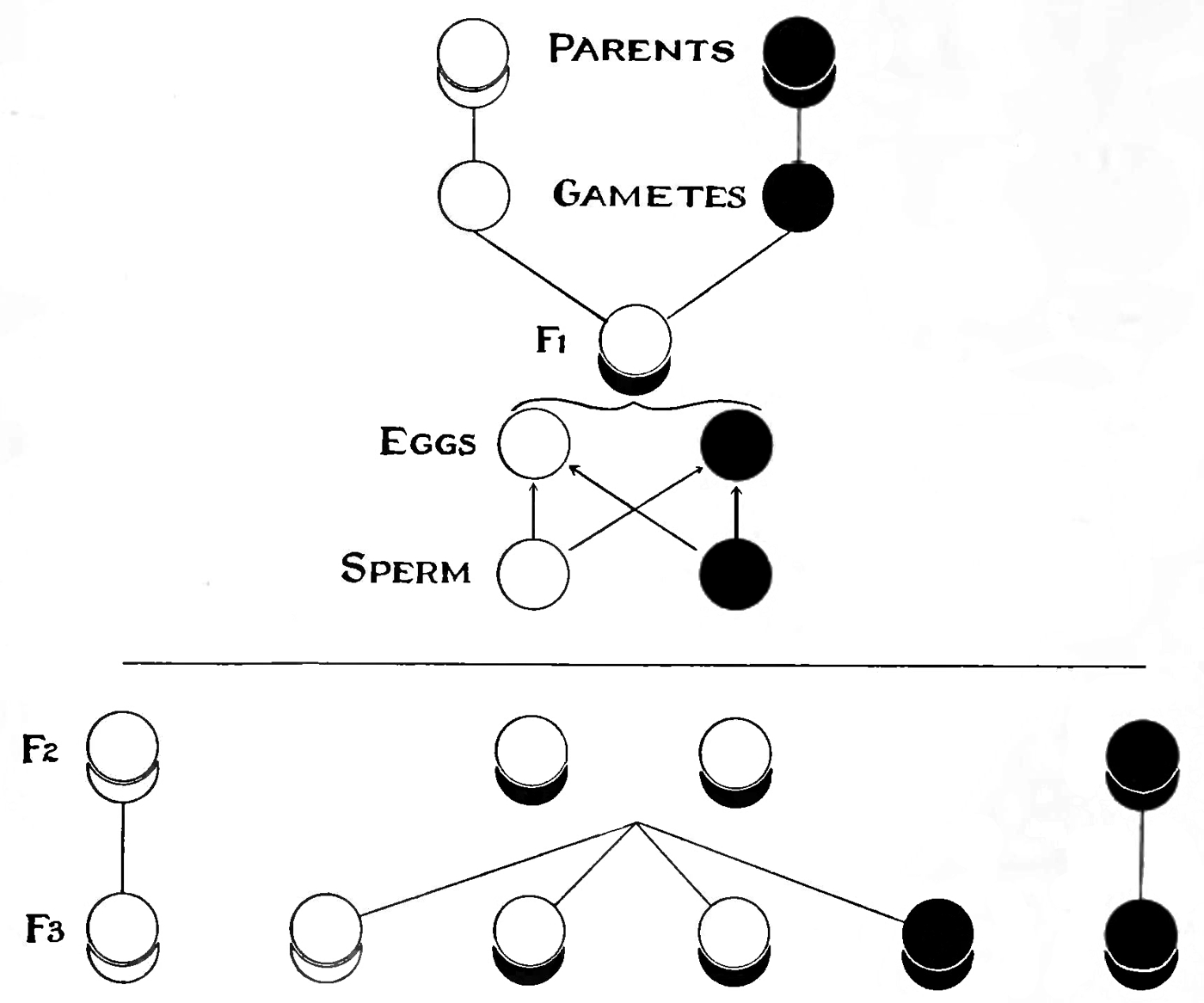 Opinions On Heredity