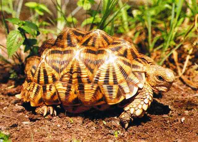 Tortoise svn 17 download movies
