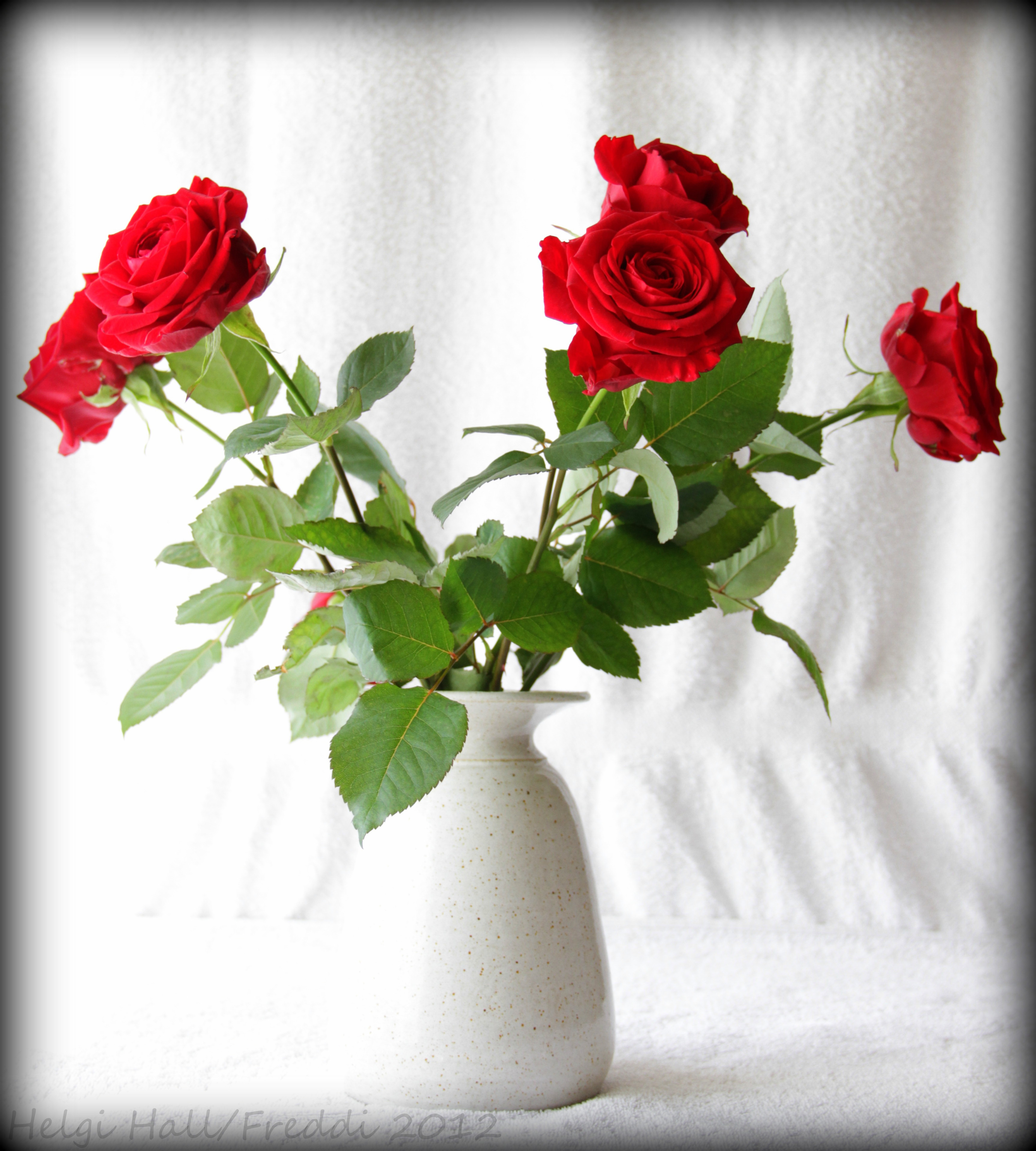 file roses are red violets are blue 7070594147 jpg wikimedia commons