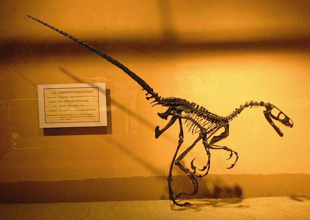 saurornitholestes wikipedia