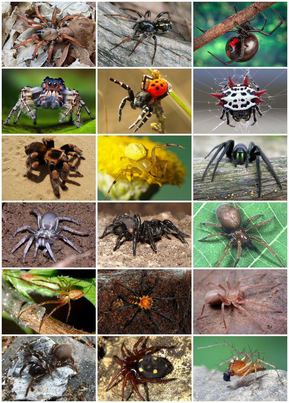 IMAGE(http://upload.wikimedia.org/wikipedia/commons/f/f9/Spiders_Diversity.jpg)