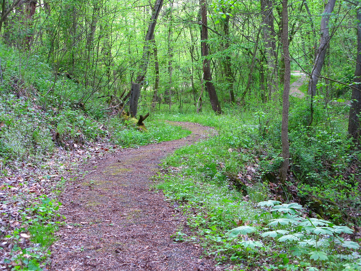 Footpath in a forrest.