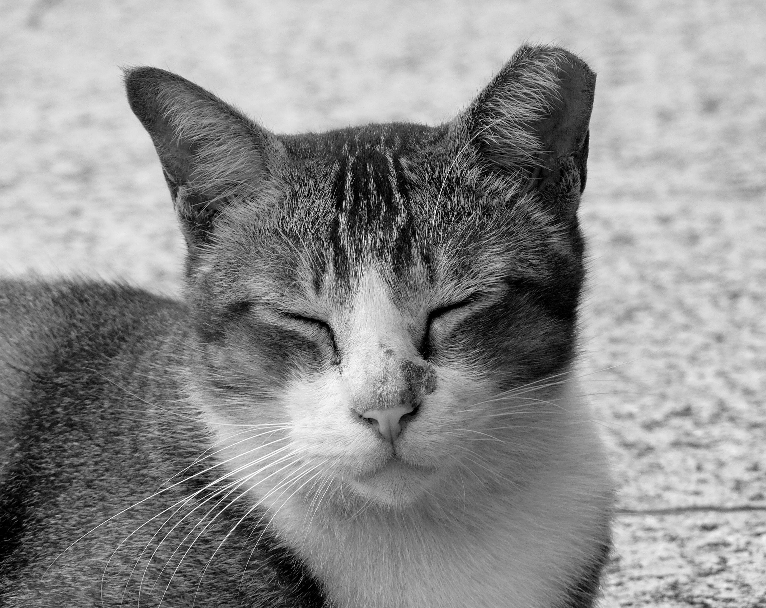 Cat S  Usb Port Kappe