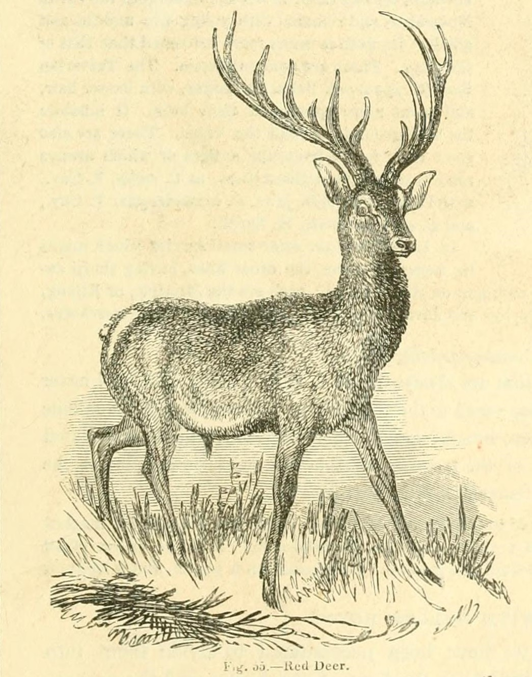 File:The animal kingdom, arranged after its organization - forming a ...