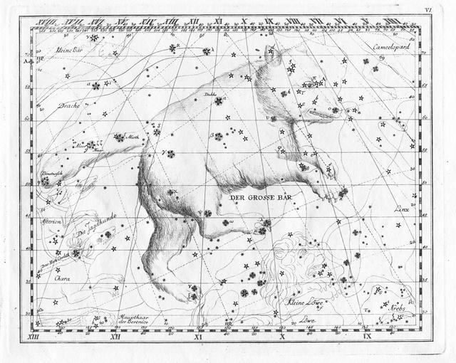 Braunbär – Wikipedia