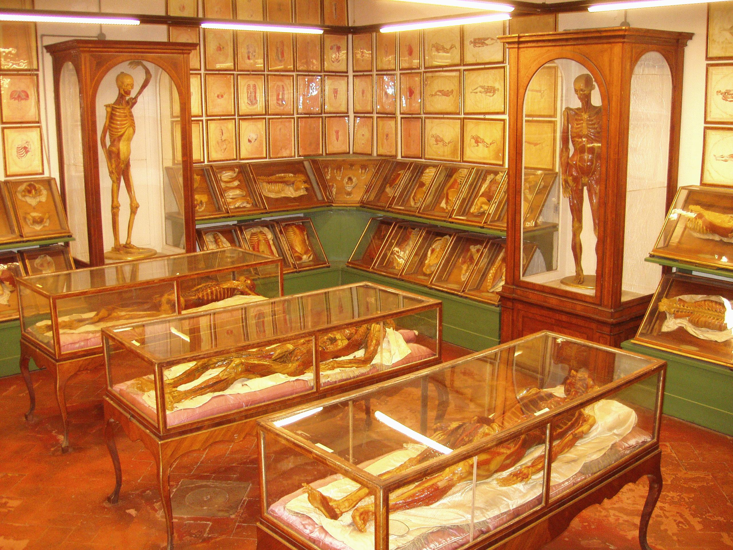 La Specola - A Classic Museum in Florence