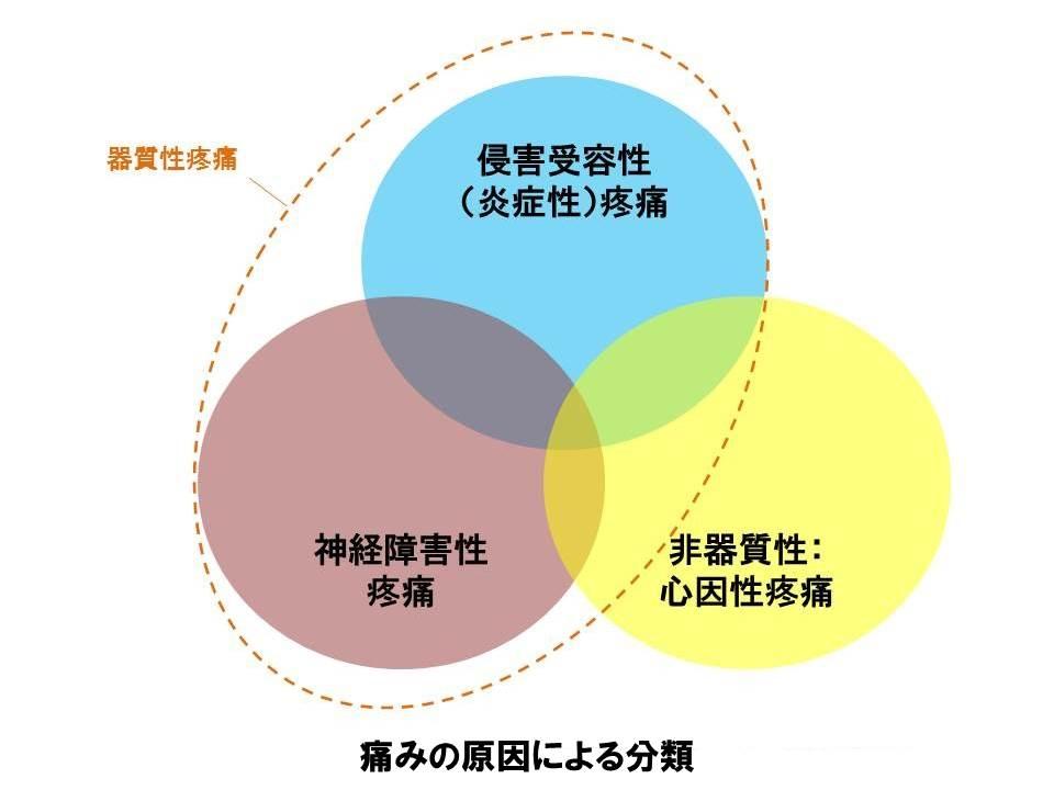 ファイル:痛みの原因による分類.jpg - Wikipedia