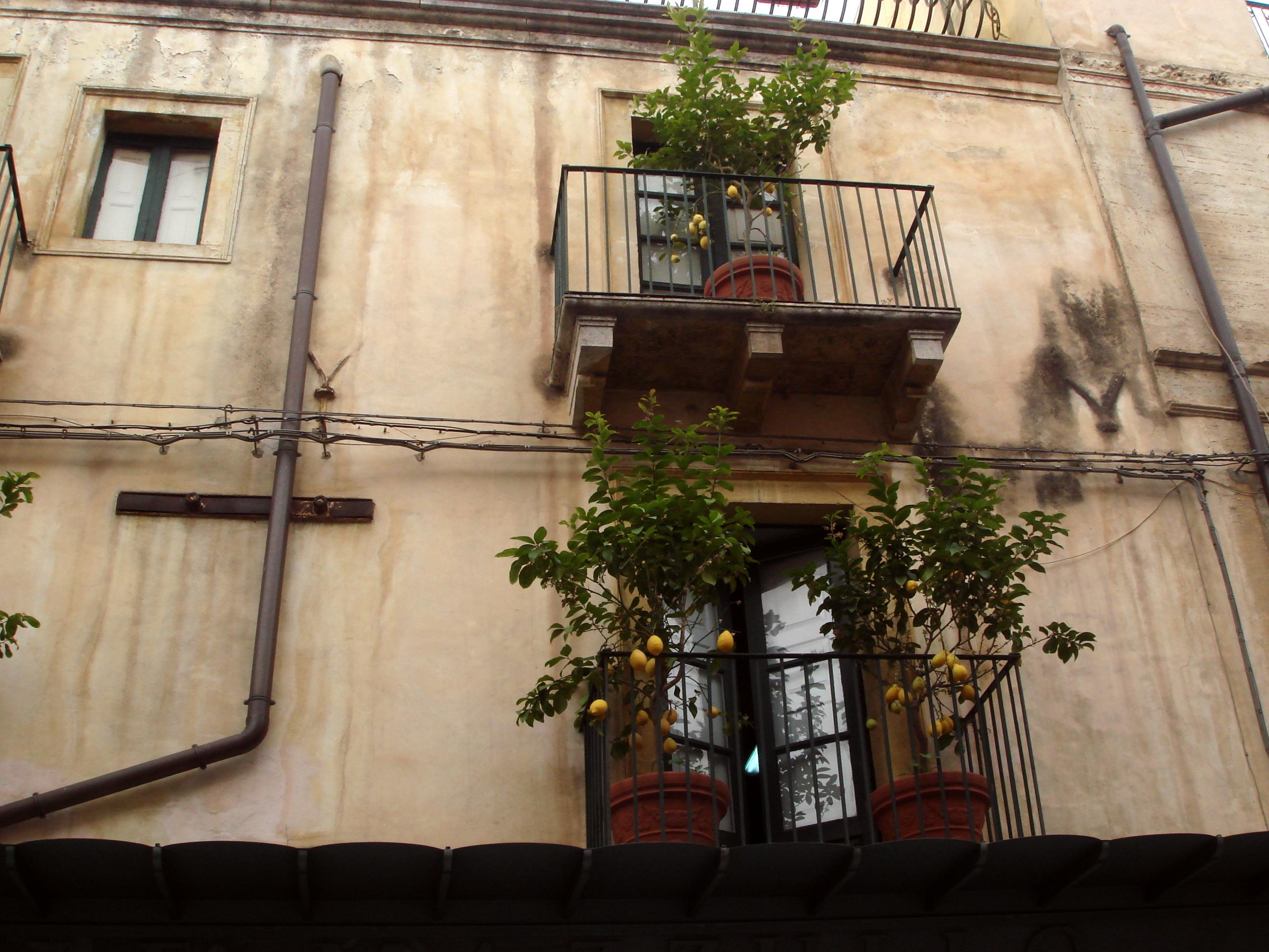 0048_-_Taormina_-_Corso_Umberto_-_Balcone_con_limoni_-_Foto_Giovanni_Dall%27Orto,_19-May-2008.jpg