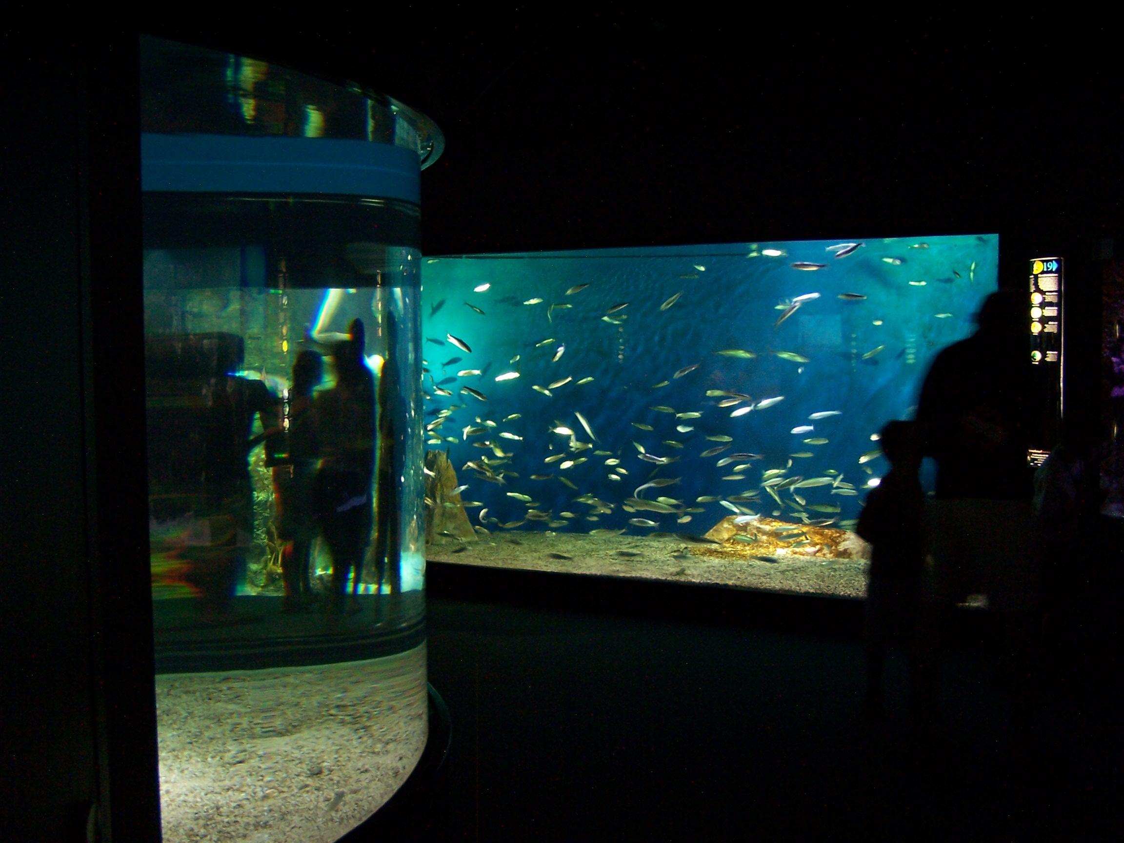 File:Aquarium de La Rochelle - Bassins 003.jpg - Wikimedia Commons