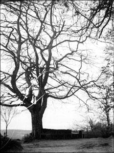 filearbre sans feuilles fontainebleau avril 1899 5963698874jpg - Arbre Sans Feuille