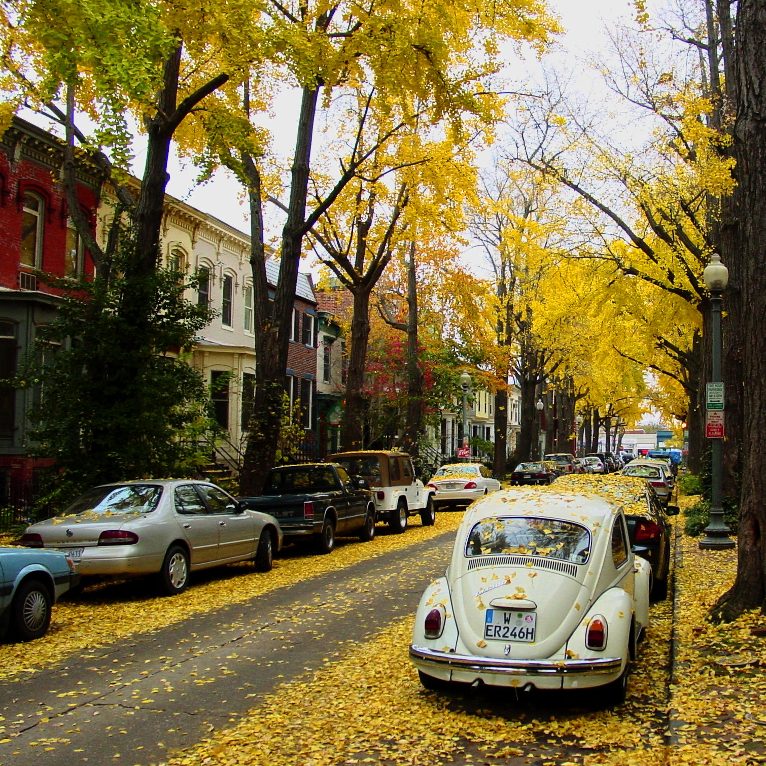 Maryland Sports Cars With Leaves