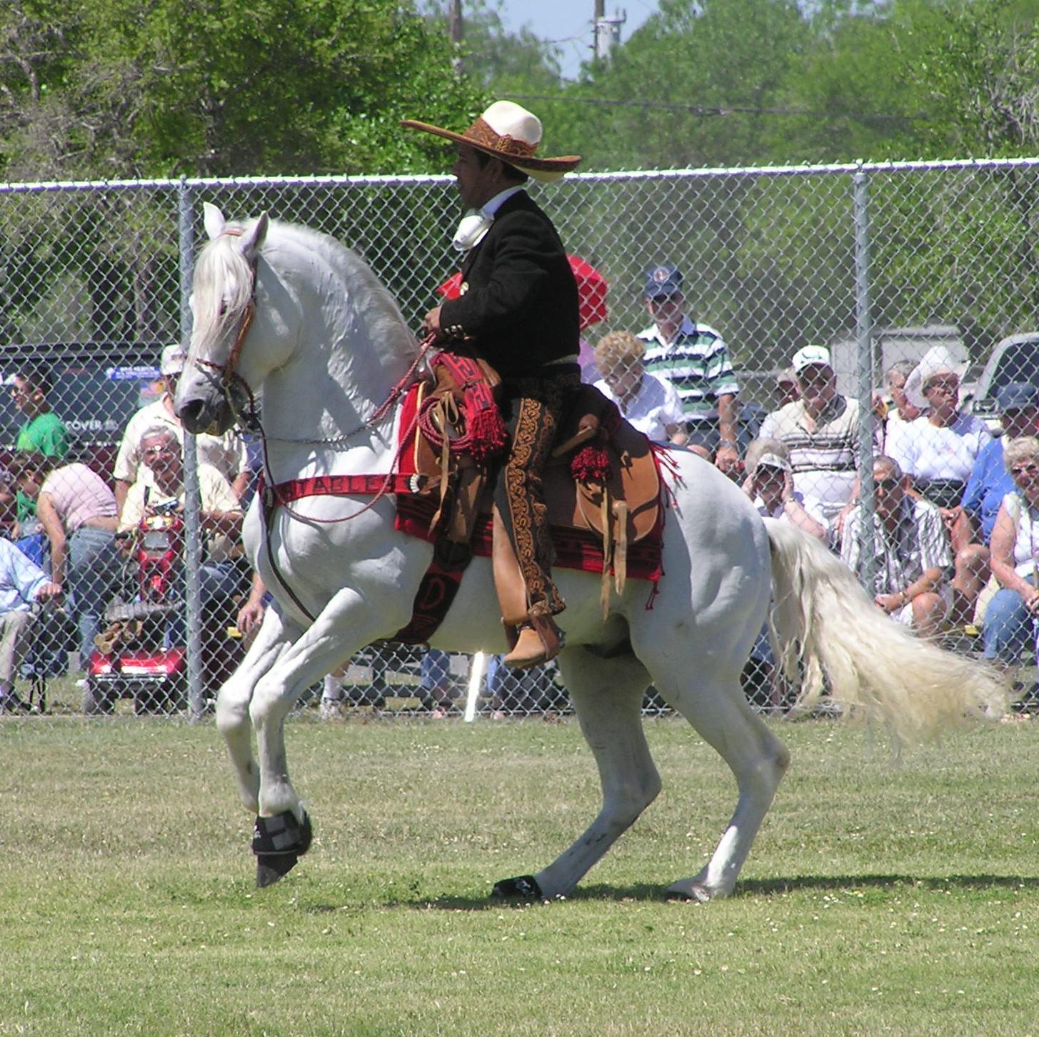 Azteca Horse - Horse Scanner