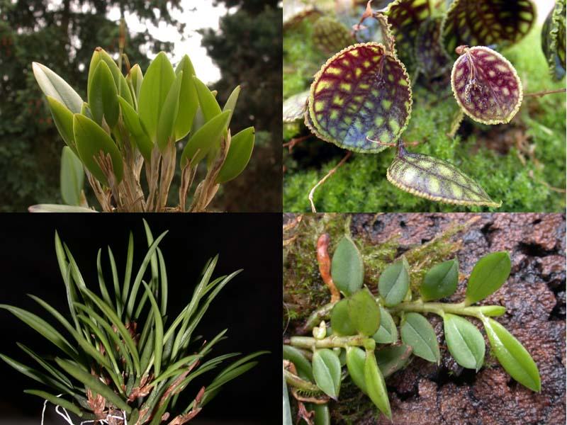 Orchideen im tropischen regenwald  Orchideen – Wikipedia