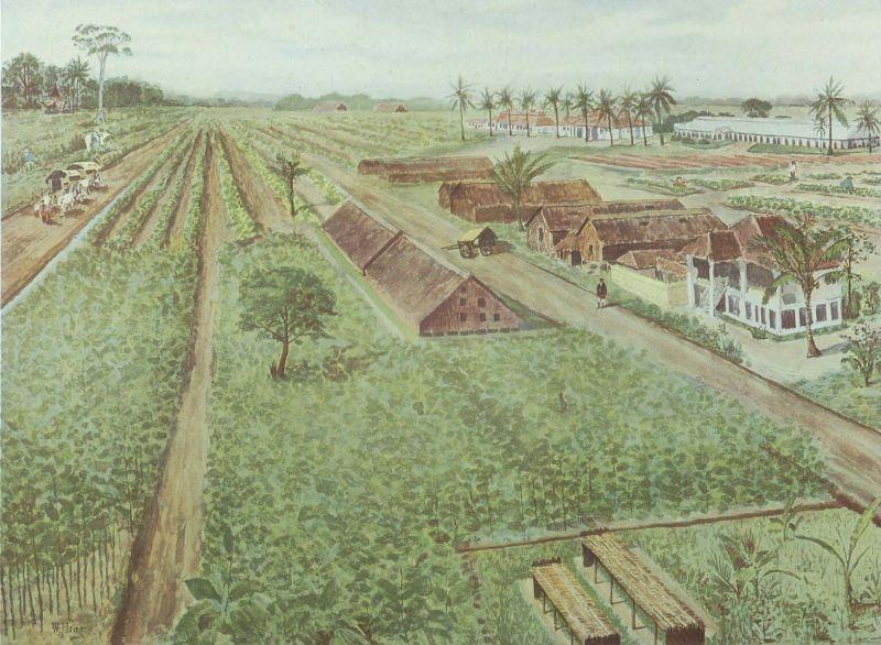 File:COLLECTIE TROPENMUSEUM Een tabaksplantage in Deli Sumatra TMnr 5349-6.jpg
