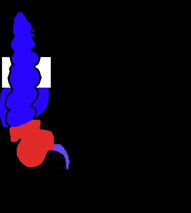 Ciego (anatomía) - Wikipedia, la enciclopedia libre
