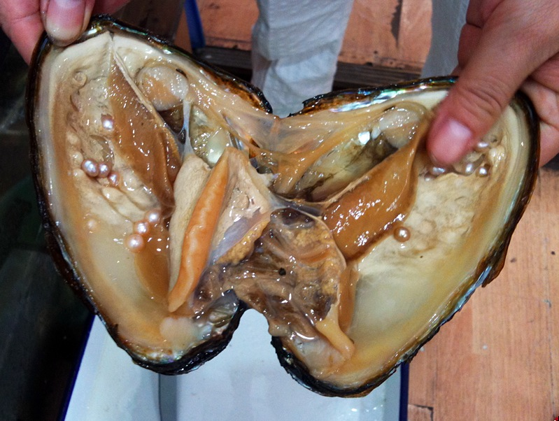 Live oysters with pearls inside - photo#6