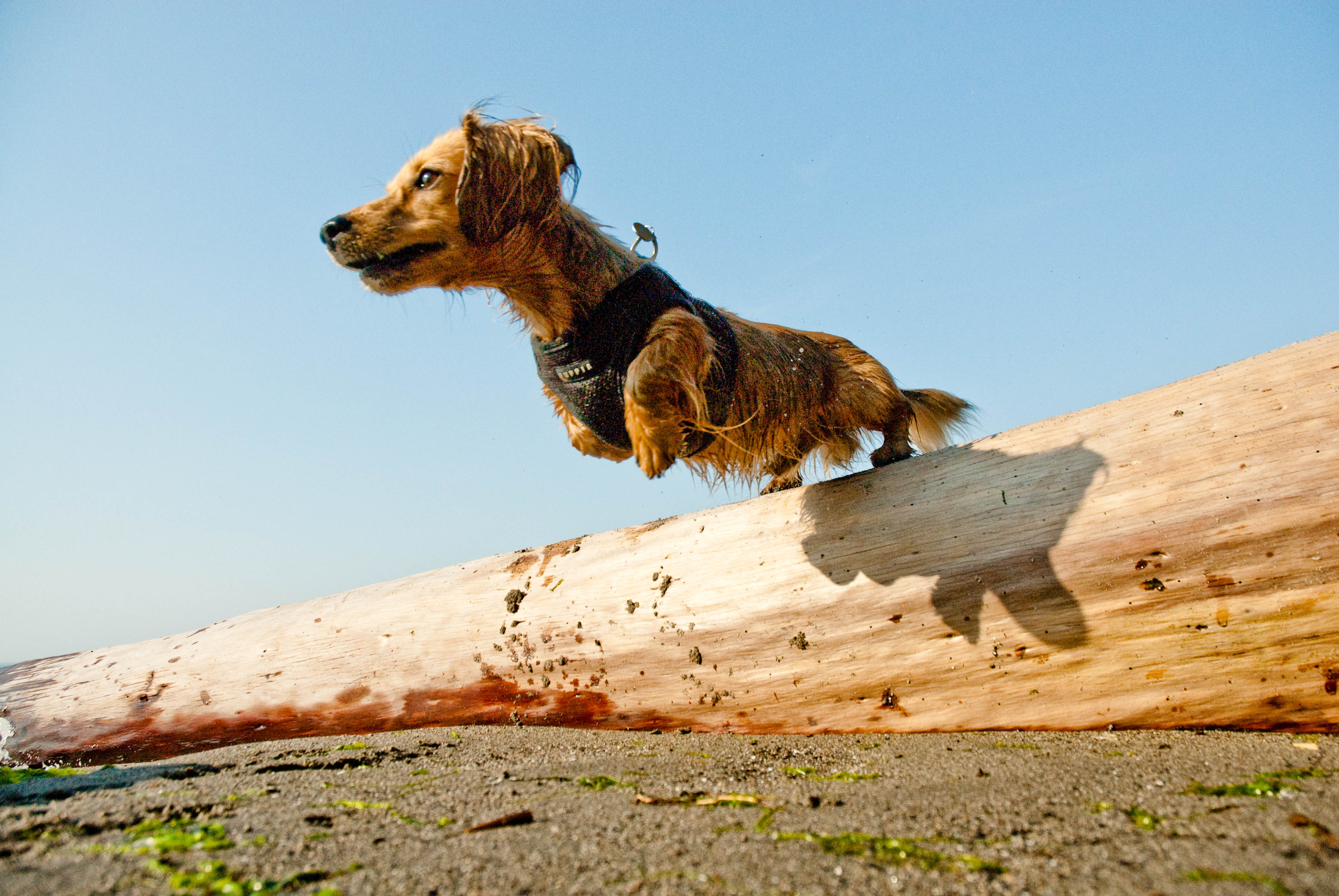 Dogs Who Fly For Free