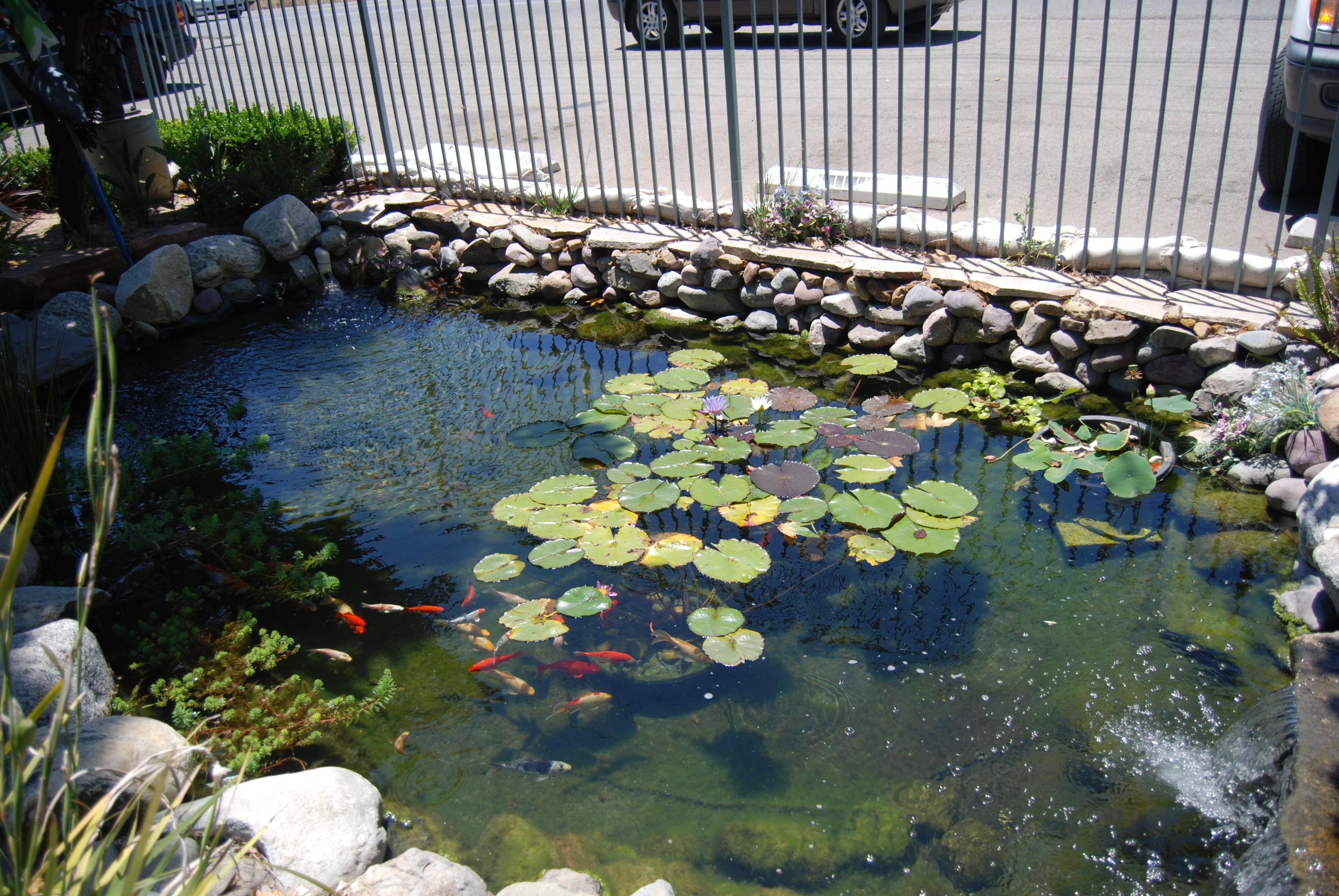 File Em Laguna Koi Ponds 2598454439 Jpg