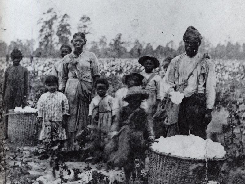 Image result for slaves in a cotton field