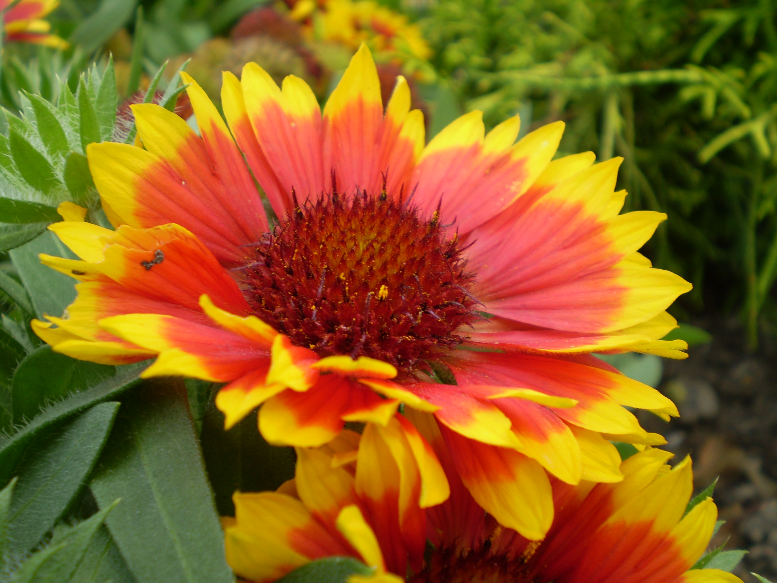 Садовые цветы: фото с названиями