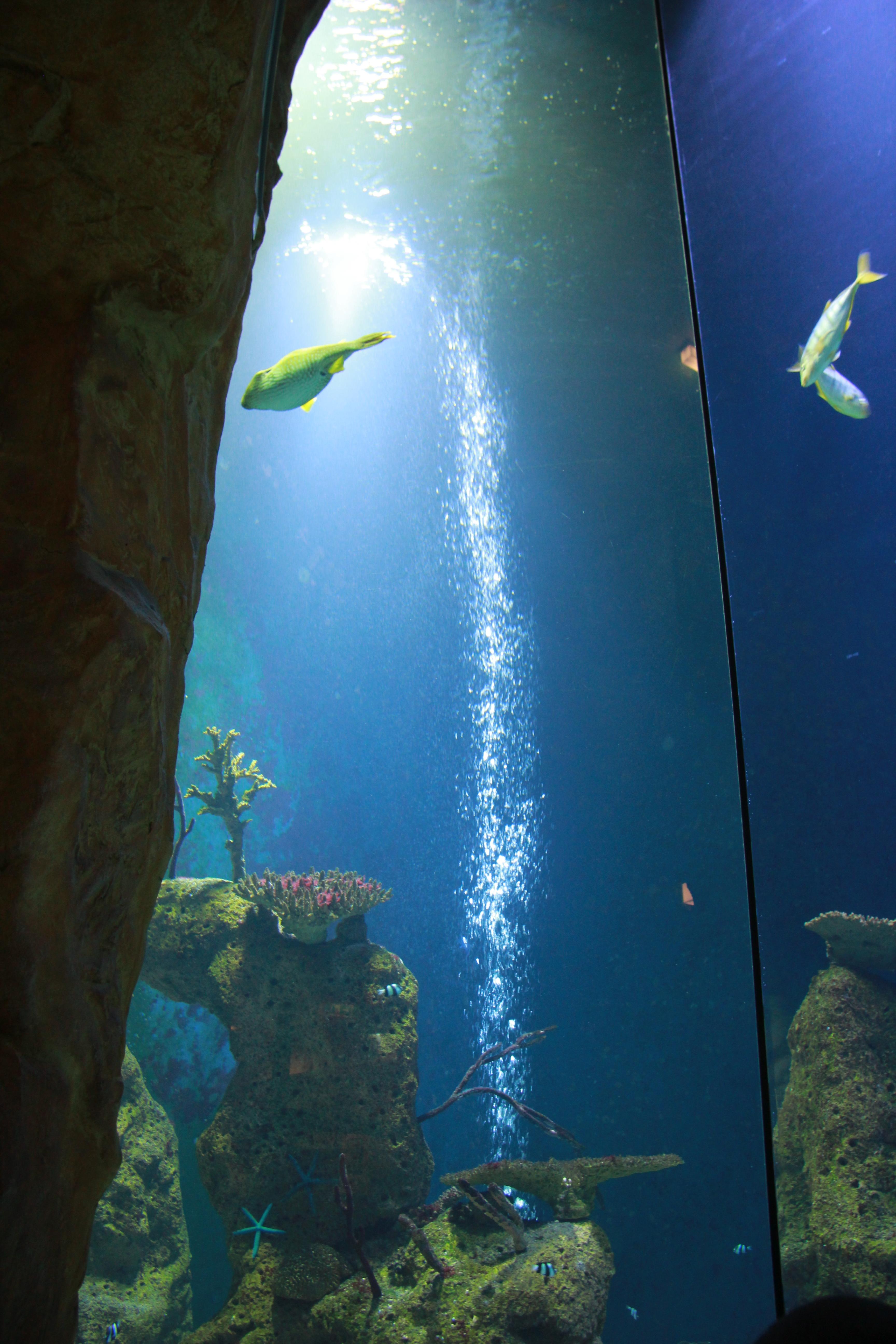 File Haus des Meeres 8743 Wikimedia mons
