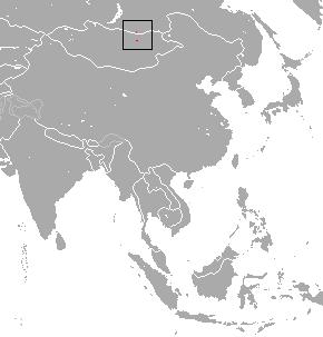 Hoffmanns pika species of mammal
