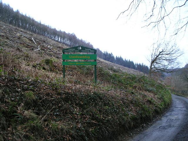 Llanllawddog, Brechfa Forest - geograph.org.uk - 1171796