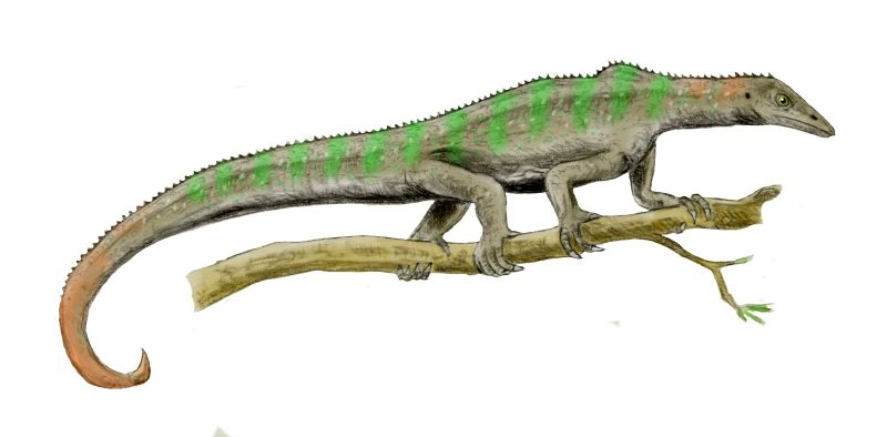 http://upload.wikimedia.org/wikipedia/commons/f/fa/Megalancosaurus_BW.jpg