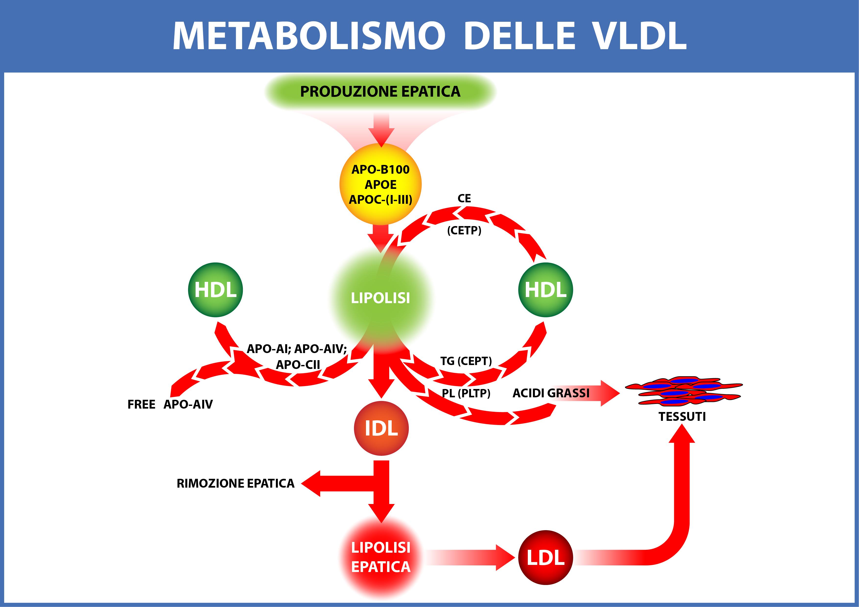 El factor más salvaje de Tipos de metabolismo no es así como asqueroso