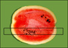 Miniature melon slice.jpg
