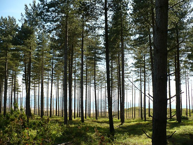 Newborough Forest - geograph.org.uk - 848822