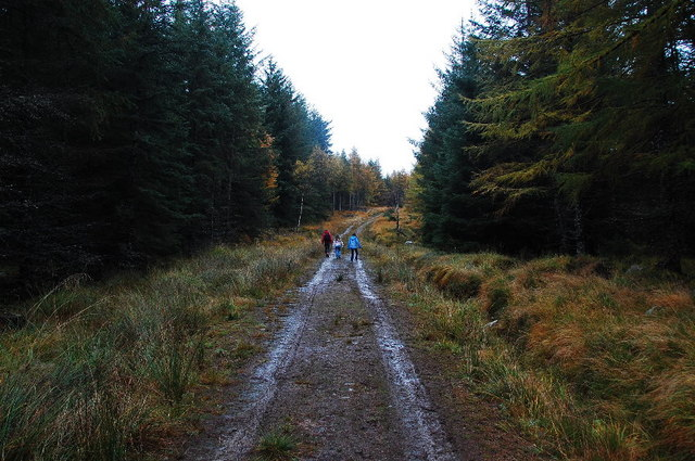 On the Sika Trail - geograph.org.uk - 1538599