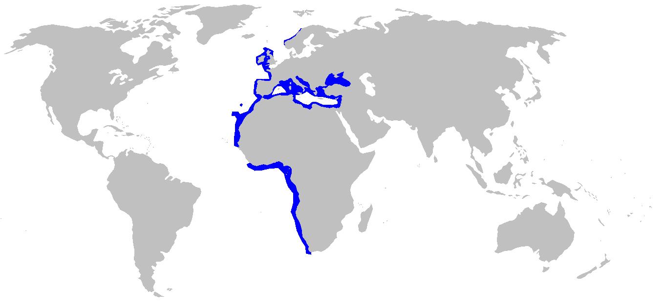 Distribución del cerdo marino