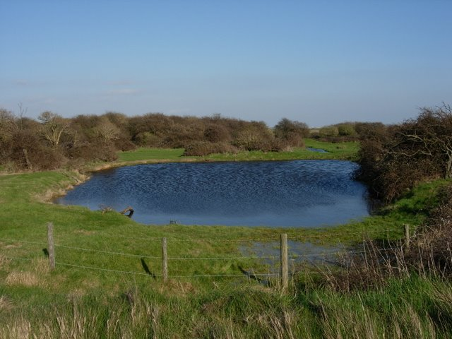Pond and bushes - geograph.org.uk - 371135