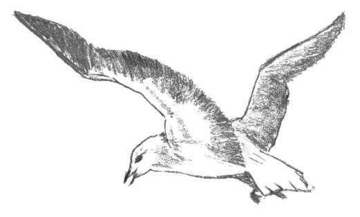 seagull in flight coloring pages - photo#35