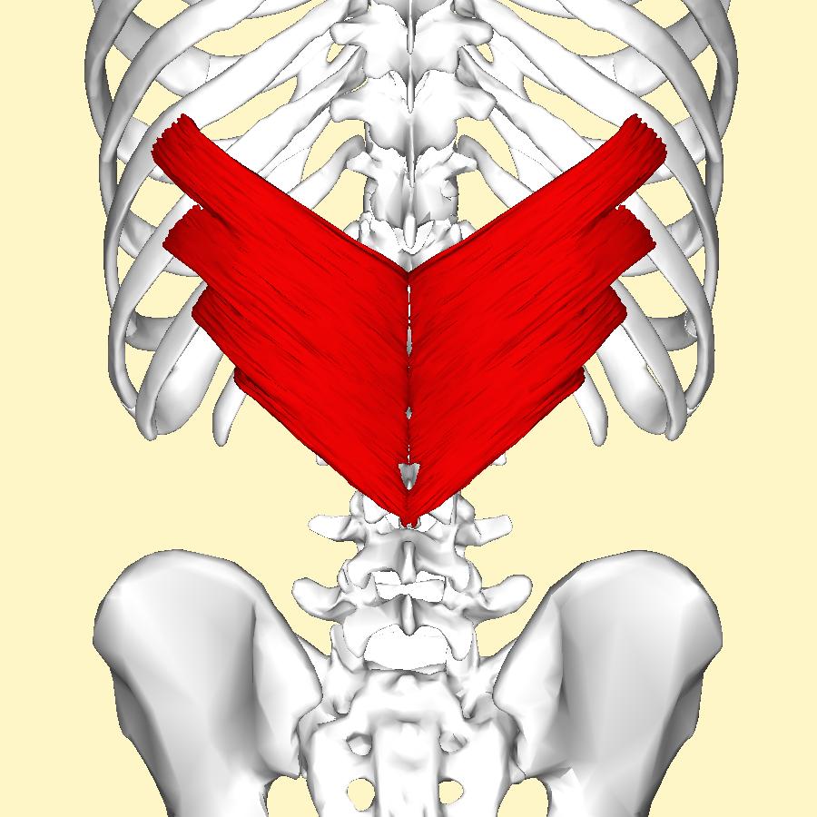 Il dolore acuto dà a un dorso al di sinistra