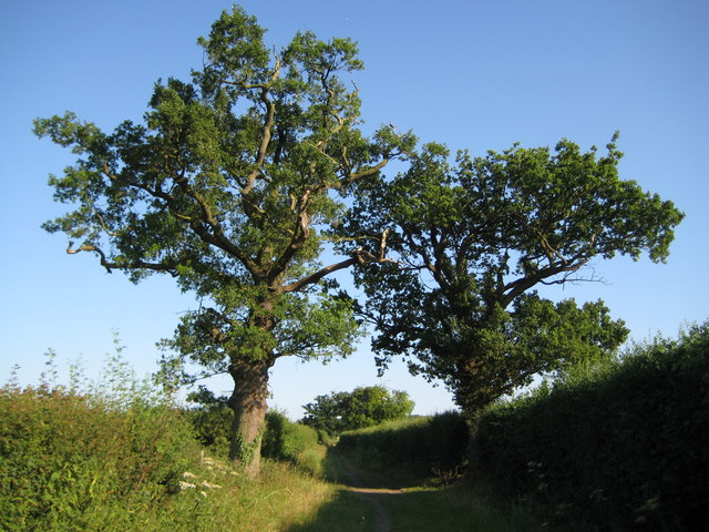 Shenley, Watling Chase Timberland Trail - geograph.org.uk - 1385640