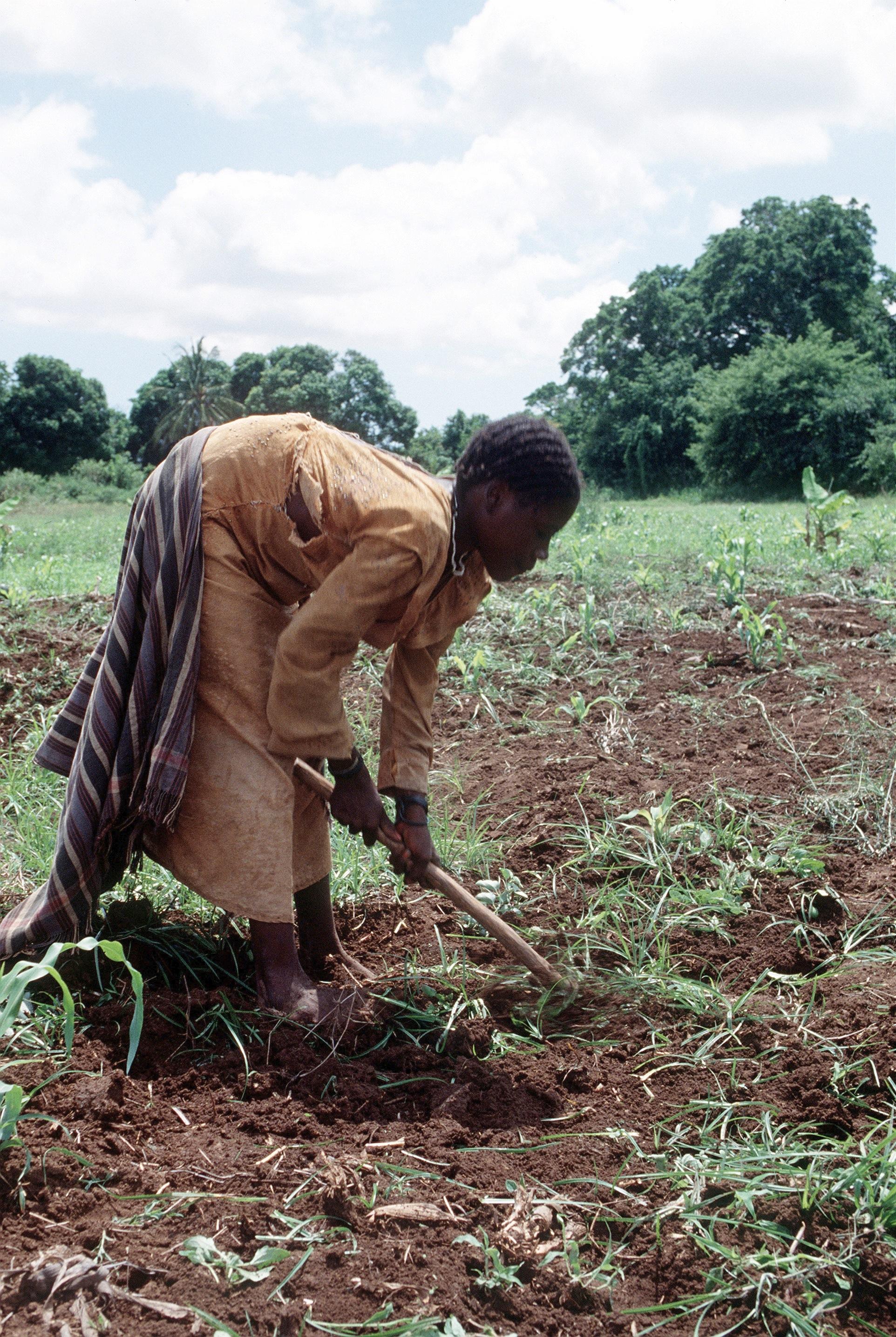 Descripció Somalia farmer woman.jpg